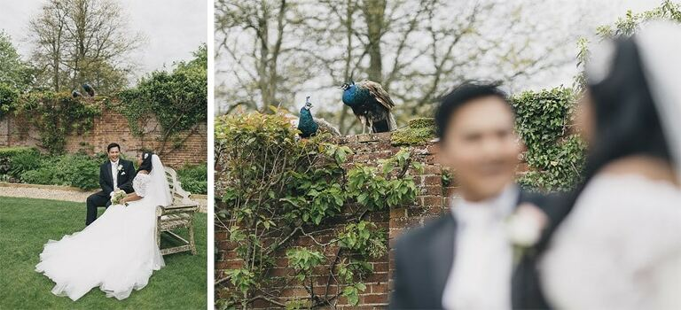 Wedding Photography Northbrook Park Peacock